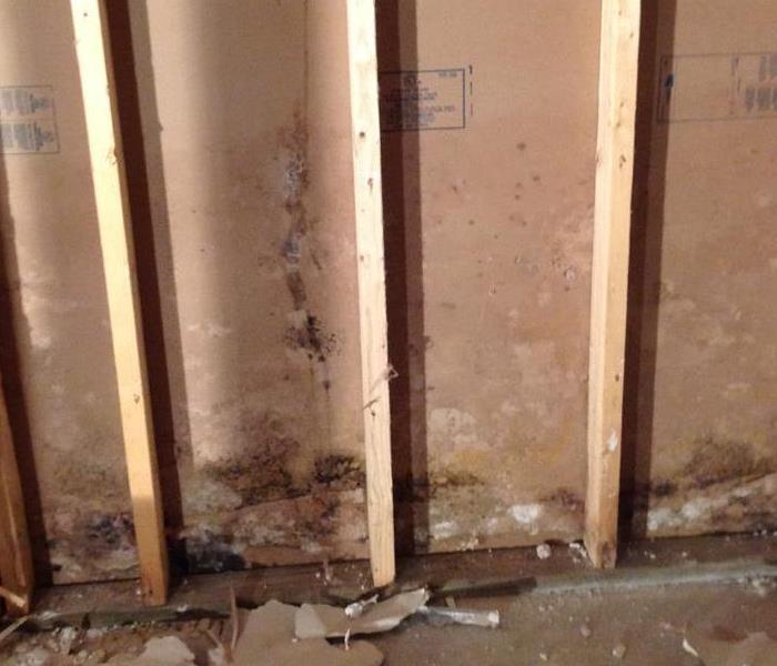 Mold Remediation Safety tips when dealing with suspected mold